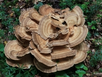 4. Pilze