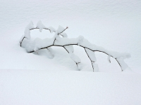Csefalvay_ Alois_Winter
