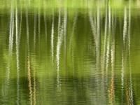 Dragomir_ Rozina - reflections