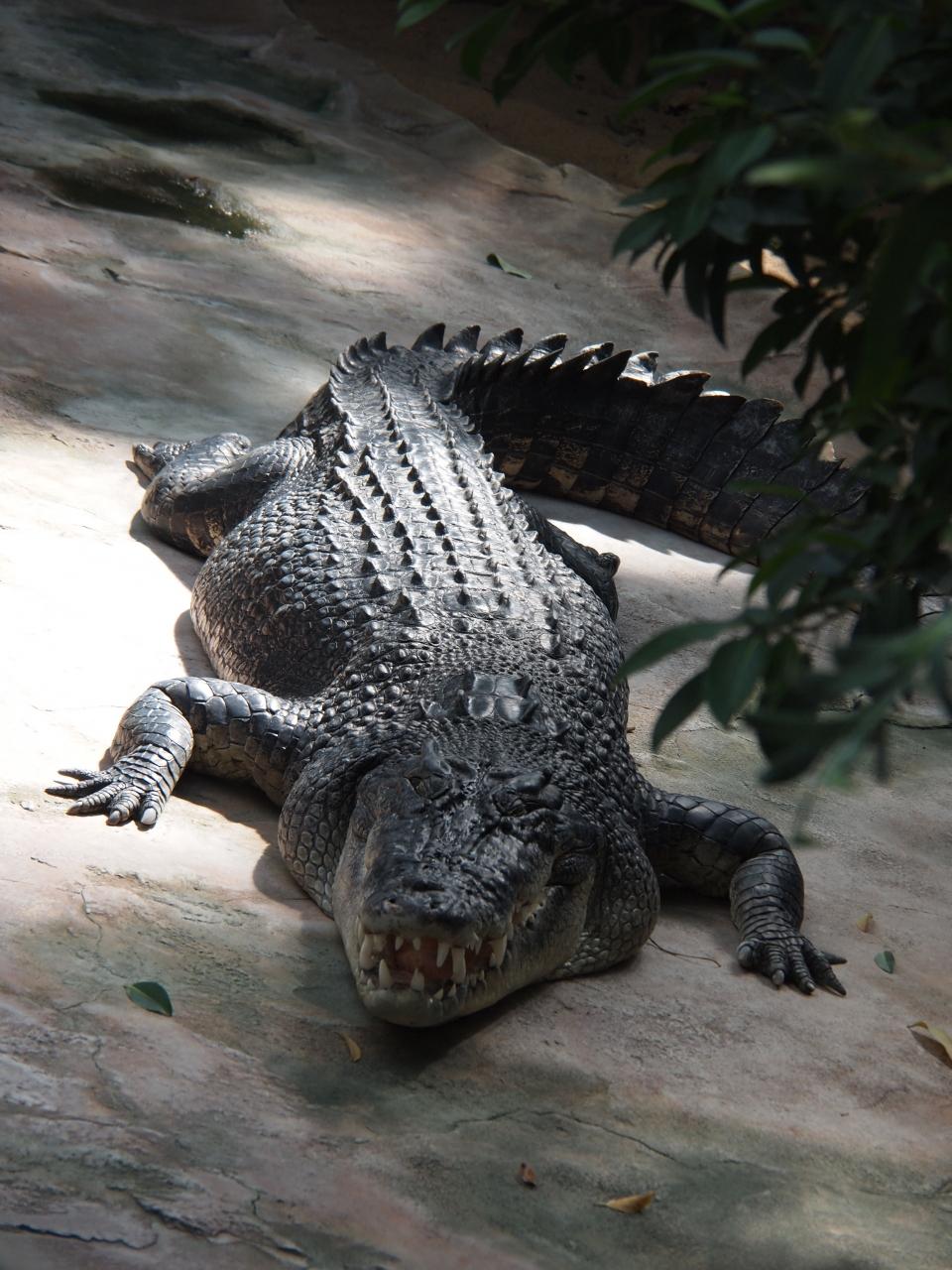 Riedel_Regina_Krokodil
