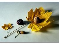 Herbst_21