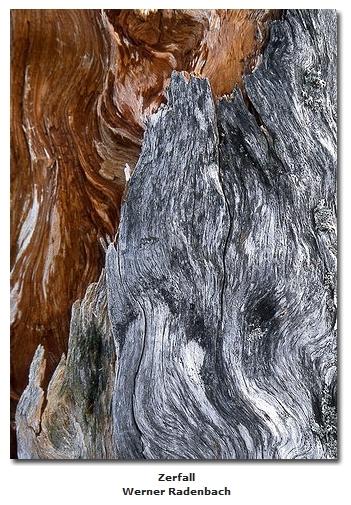 2018-06-10 23_05_29-Galerie CLICCS Foto Forum Heidenheim __ Ausstellung Natur __ Zerfall_Werner_Rade
