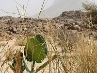 Algerien Tassili n Ahaggar 2_Tassili_n_Ahaggar_2