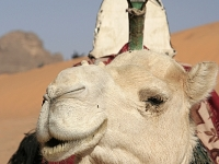 Algerien Tassili n Ajjer 20_Yalla