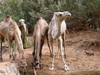 Algerien Tassili n Ajjer 32_Tassili_n_Ajjer_Guelta