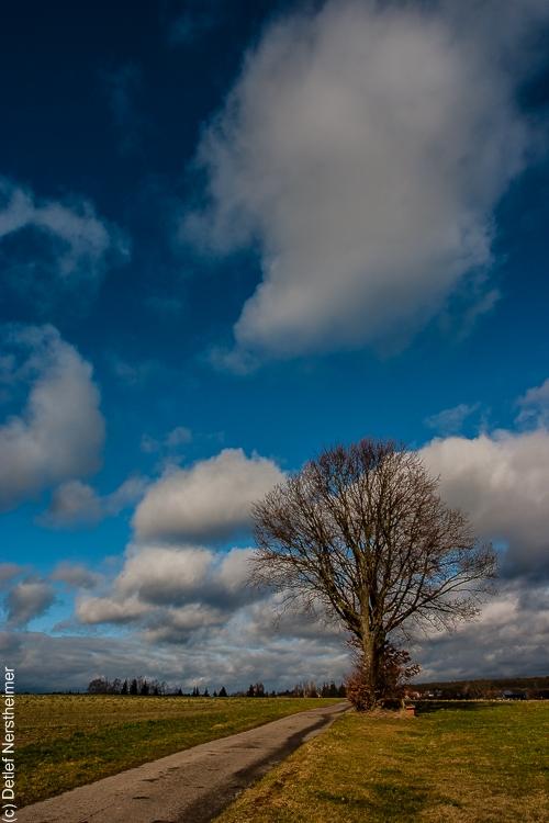 Baum CRW_2678