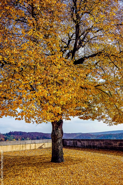 Baum, Herbst P1000842