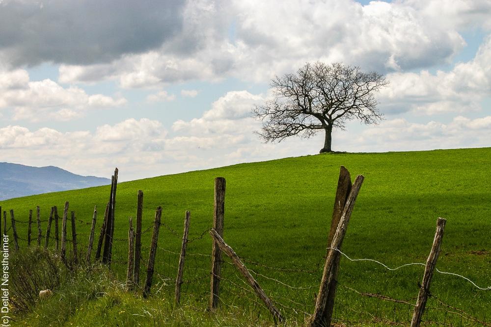 Baum IMG_3542