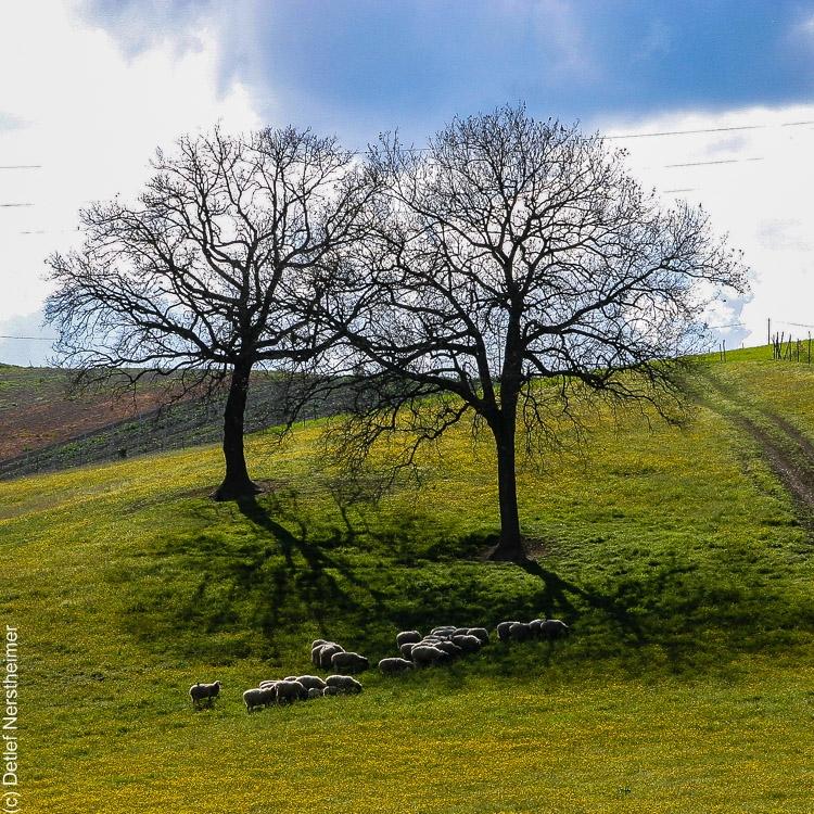 Baum IMG_3551