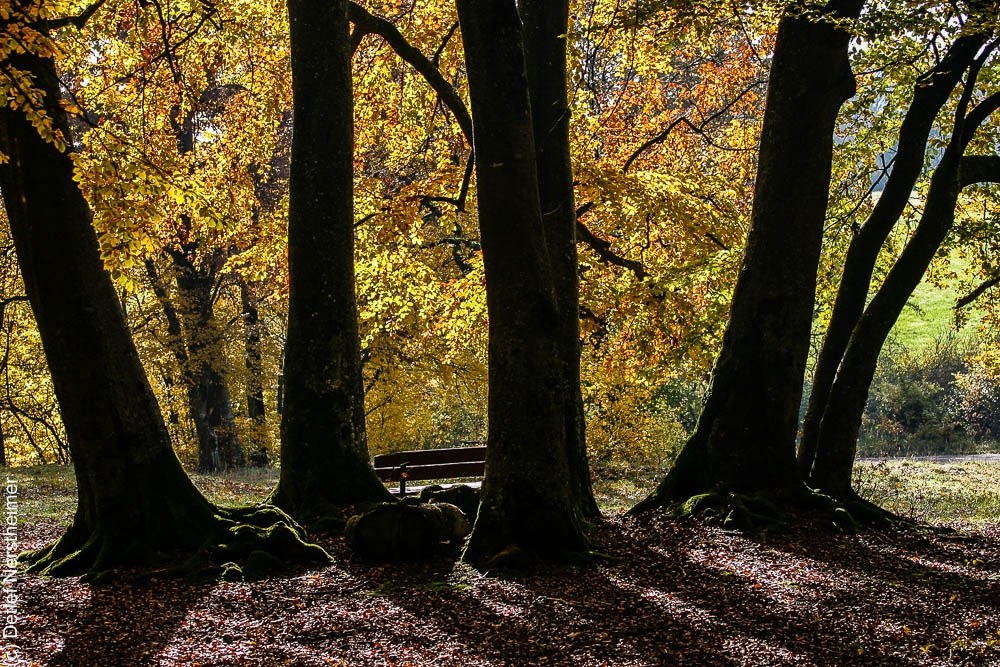 Baum IMG_5698