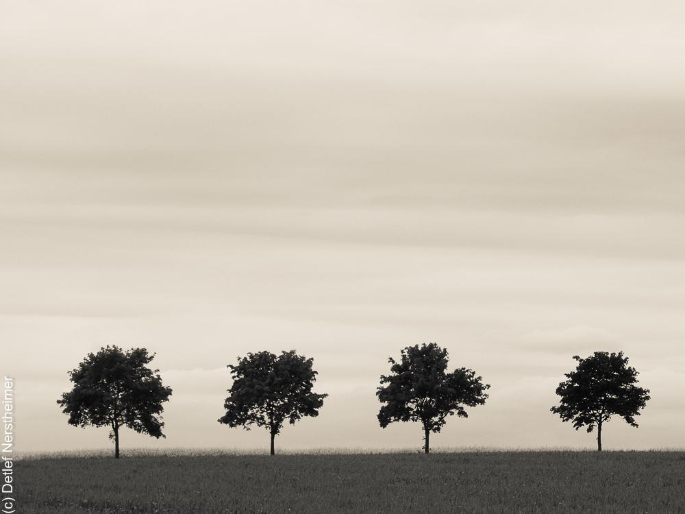 Baum, Quartett P5255041