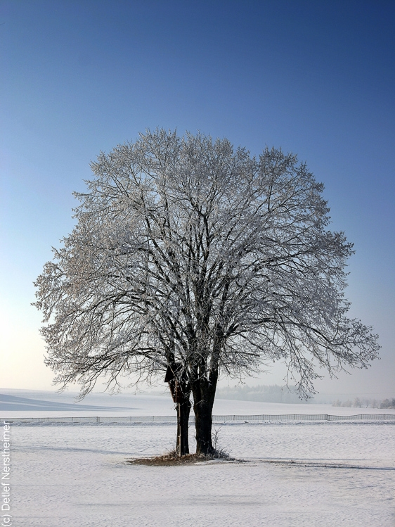 Baum, Zang IMG_0143