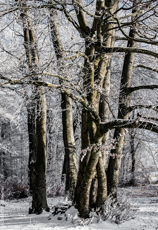 Baum, Zang _MG_2482