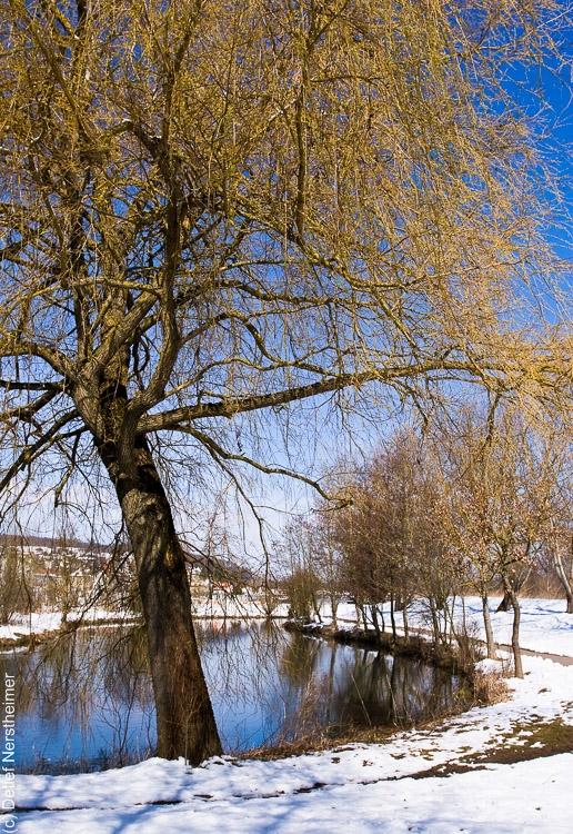 Baum, Zang _MG_2911-9