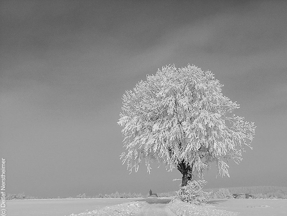 Winter, Zang P1103286
