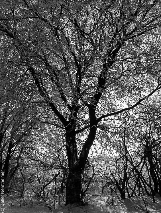 Winter, Zang P1113330