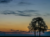 Abend, Baum IMG_0689