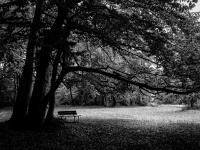 Baum, Herbst 102_0208