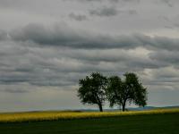 Baum IMG_3710