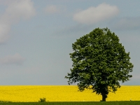Baum IMG_8072