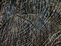 Baum, Maserung IMG_0539