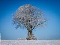 Baum P1066691