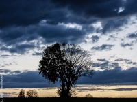Baum P5028176