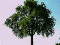 Baum P5185005