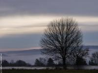 Baum PB246307