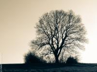 Baum PC086482