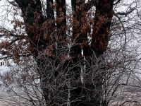 Baum Wege