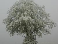 Baum, Zang IMG_5969