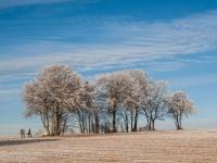 Baum, Zang _MG_2396