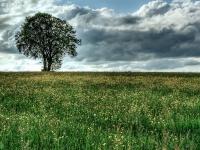 Baum, Zang _MG_5750_1_2