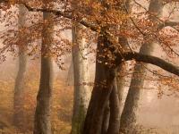 Herbstwald-2-2