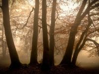 Herbstwald-3-2