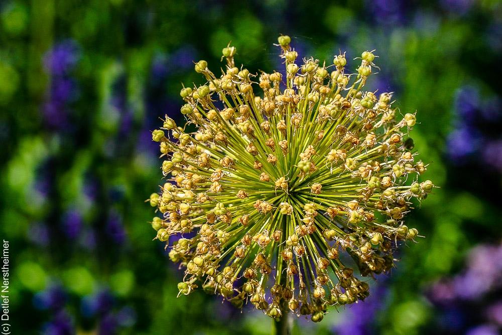 Blume IMG_1566a
