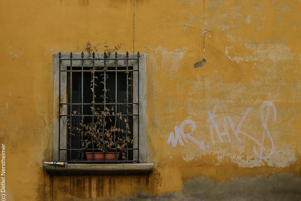 Fenster IMG_3259