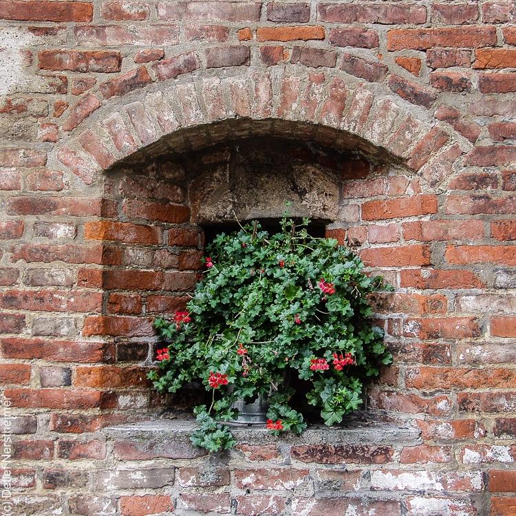 Fenster, Italien, Tocana, Tueren P8299838