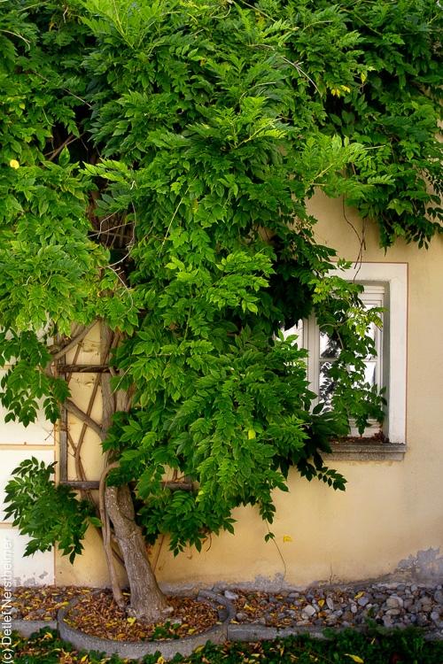 Fenster _MG_2253