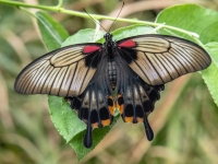 Allgäuer Schmetterling-Erlebniswelt Pfronten - Weißbach