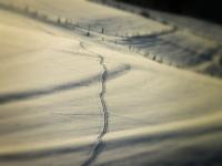 Kurt Kuhn - Spuren im Schnee