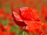 dragomir_rozina-just_red