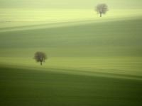 kuhn_kurt-zwei_bäume