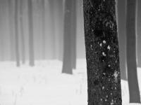 2009.03.13 Schneeschmelze-DSC09812