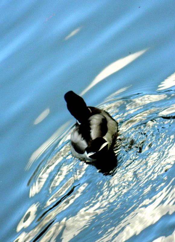 Swimming in blue_Bildgröße ändern