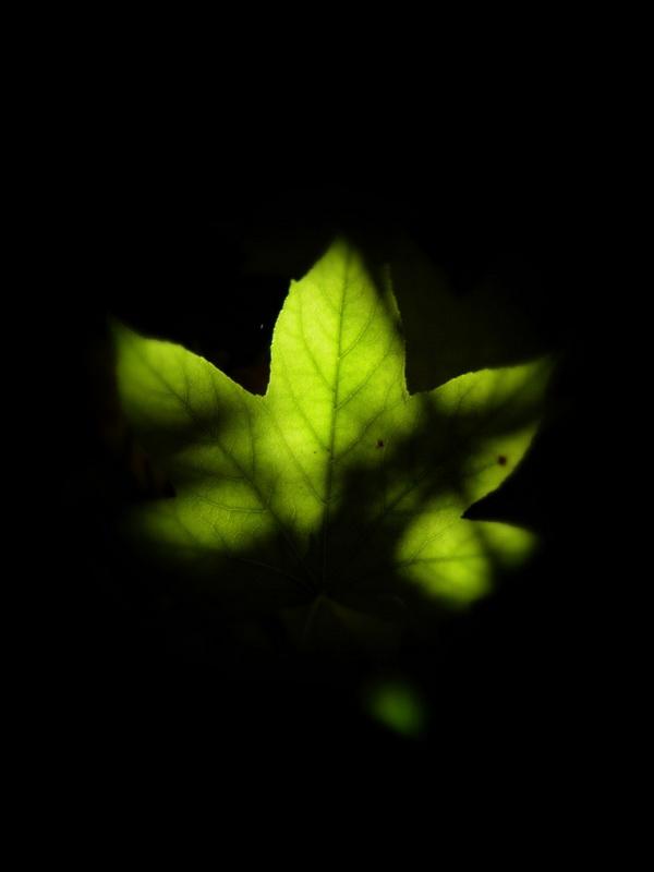 licht_Bildgröße ändern