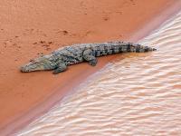 002-Matmata-Krokodil-0101